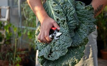 Wie benutzt man eine Gartenschere?