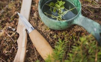 Bushcraft: so much more than only survival